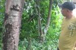 ULAT BULU: Serang Sukoharjo