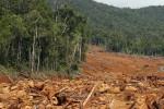 HUTAN KRITIS: 640.000 Hektare Hutan di Jateng Kritis