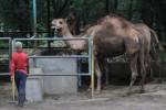 INVESTOR TSTJ: Pemkot Diminta Libatkan Tim Konservasi Kebun Binatang