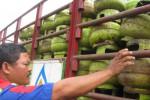 KELANGKAAN ELPIJI: Warung Makan Diimbau Tak Gunakan Elpiji 3 Kg