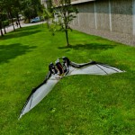TEKNOLOGI: Bikin Robot Pesawat, Ilmuwan Pelajari Kelelawar Australia