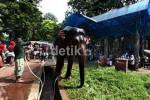 TERINJAK GAJAH, Kepala Pusat Konservasi Gajah Riau Meninggal
