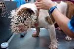 Kasihan! Wajah Bella Si Anak Anjing Dipenuhi Ratusan Duri Landak