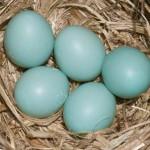 Harga Telur di Wonosari Turun Drastis