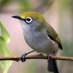 Berharga Puluhan Juta, Bisnis Burung Kian Menjanjikan