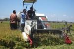 MT I Mundur, Petani Diminta Ubah Pola Tanam Padi