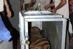 Harimau Mati Saat Diangkut, Kemenhut Minta Tanggung Jawab Garuda