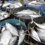 Cuaca Buruk, DIY Paceklik Ikan