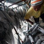 Terobosan untuk Keberlanjutan Perikanan Budidaya, KKP Lakukan Ini