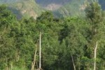 STN dan PRD Tuding Menhut Rusak Hutan