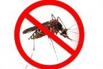 Ini Tips Alami Usir Nyamuk