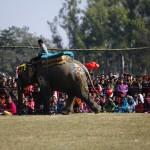 24 Tim Ramaikan Balapan Gajah