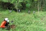 CEGAH SERANGAN KERA, Warga Desa Tanam Ribuan Pohon Buah