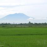 PERTANIAN SLEMAN : Petani Didorong Memanfaatkan Teknologi