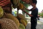 Dua Jenis Durian Lokal Karanganyar Bakal Diekspor