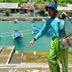 Tangkap Lobster, Nelayan Bantul Butuh Modal Berlipat