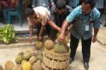 Produksi Durian Karanganyar Capai 22.000 Ton