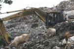Alat Berat Rusak, Sampah TPA Putri Cempo Meluber ke Jalan