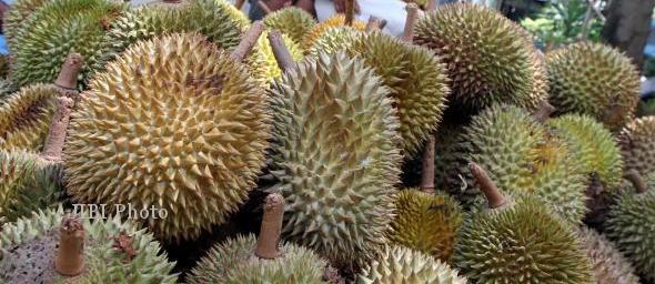 MUSIM DURIAN KARANGANYAR : Produksi Durian Mojogedang Anjlok, Petani Rugi Rp350 Juta