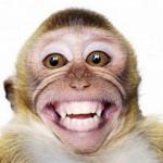 Monyet Serang Dlingo, Warga Resah