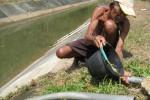 PERTANIAN SRAGEN : Kemarau, Areal Tanaman Padi Menyusut 18.626 Hektare