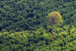 Data Hutan Bakal Diintegrasikan Lewat Teknologi Citra Satelit