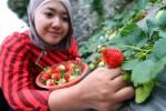 Pisang dan Strawberry Sumber Nutrisi di Pagi Hari