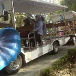 Taring dan Atraksi Satwa Dongkrak Pengunjung Gembira Loka