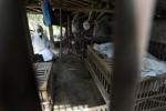 FLU BURUNG : Lokasi Tertular H5N1 Dokter Hewan Belum Diketahui