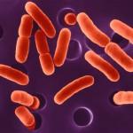 Waspada, Sebagian Air KPSPAMS Karanganyar Mengandung Bakteri E. Coli