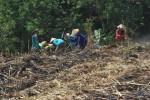 Demi Rp50.000, Buruh Sragen Mengadu Nasib ke Gondangrejo Karanganyar