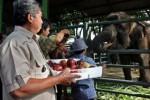NATAL 2014 : Kebun Binatang Surabaya Incar 100.000 Pengunjung