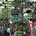 2.500 Burung Berkicau Berebut Gelar 'Maharaja'