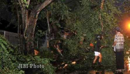 BENCANA MAGETAN : Hujan Angin Sebabkan Pohon Tumbang di Jalan Sarangan-Cemoro Sewu