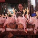 Peternak Ayam Terancam Gulung Tikar, Mengapa?