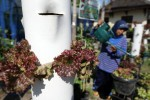PERTANIAN BANTUL : Mei, Waktu Pas untuk Tanam Holtikultura