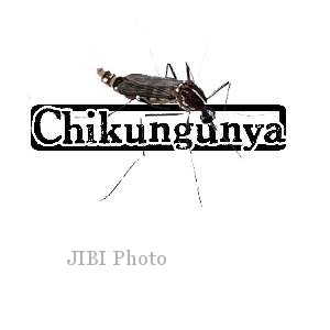 Ilustrasi nyamuk cikungunya (Dok/JIBI)