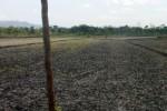 TANAH KAS DESA : Eks BPD Karanganyar Minta Investigasi Lelang Tanah Diulang