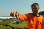 Ubur-Ubur Mulai Menyerang Wisatawan di Pantai Parangtritis