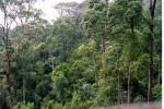 Luas Kawasan Hutan di Sragen Belum Penuhi Target