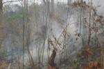 KEBAKARAN HUTAN : BNPB Prediksi Kebakaran Hutan Memuncak September-Oktober 2015
