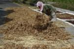 KORUPSI KEDELAI : Bantuan Rp8 Miliar untuk Genjot Produksi Kedelai