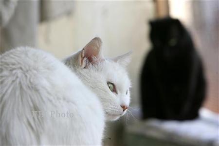 Kucing Dicekoki Miras Hingga Tewas, Pelakunya Mahasiswa UIN Jogja