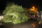 Puluhan Pohon di Bantul Tumbang Diterpa Hujan & Angin, 4 Orang Terluka