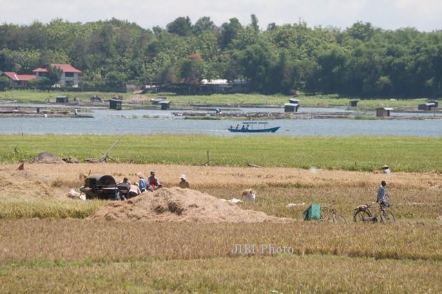 KEKERINGAN BOYOLALI : Air Bendung Andong Menyusut, 200 Hektare Sawah Tak Teraliri