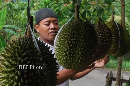 Petani Kokap Butuh Kontes Durian