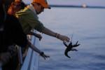 Bongkar Lambung Pesawat, Bea Cukai Temukan Benih Lobster Rp14,4 Miliar