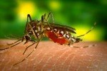 DEMAM BERDARAH SEMARANG : Waspadai DBD dan Malaria saat Kemarau Basah!