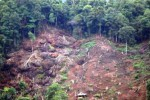 PELESTARIAN LINGKUNGAN : Aktivis Lingkungan Desak Jokowi Perkuat Moratorium Hutan