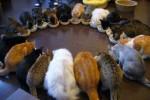 KISAH UNIK : Demi 121 Kucing, Pria Ini Nekat Mencuri